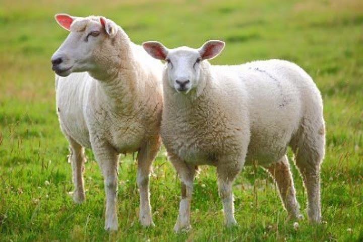 dưỡng trắng da toàn thân cùng nhau thai cừu